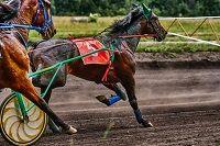 Zwei Pferde im Rennen